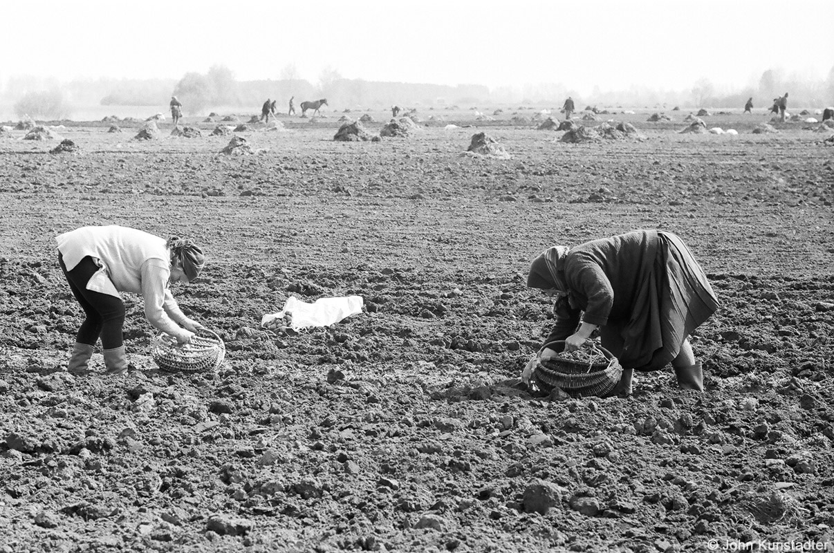 21-planting-potatoes-tsjerablichy-2009