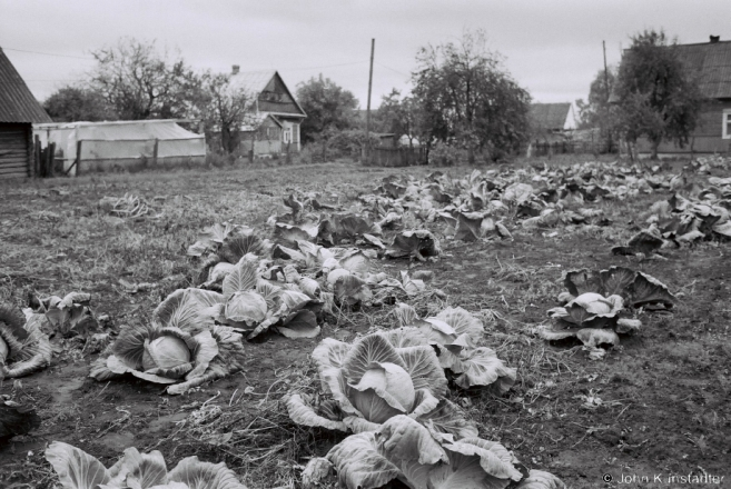 1.Cabbages to Harvest before Pakrou, Tsjerablichy 2017, 2017243b- (F1100012