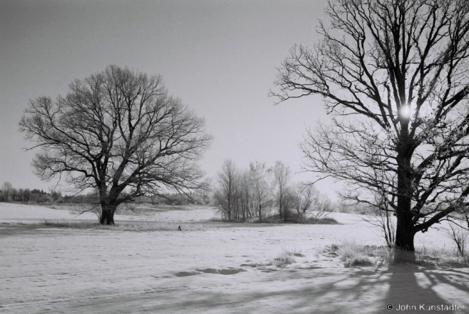 2-oak-trees-of-belarus-dzjaniski-2014-2014024-06