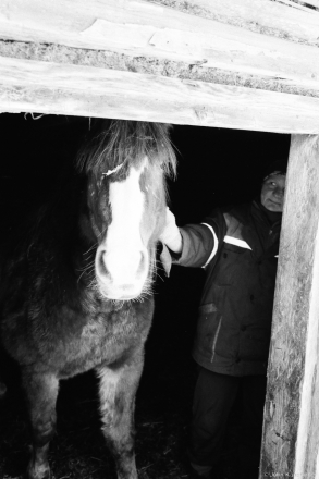 23c.Masha the Mare and Her Owner, Hajna 2016, 2016349-36A(2)