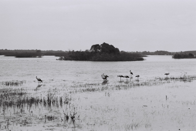 3.Spring Flood and Storks, Vjeras'nitsa 2013, 2013135a-26